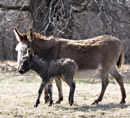DonkeyBabe